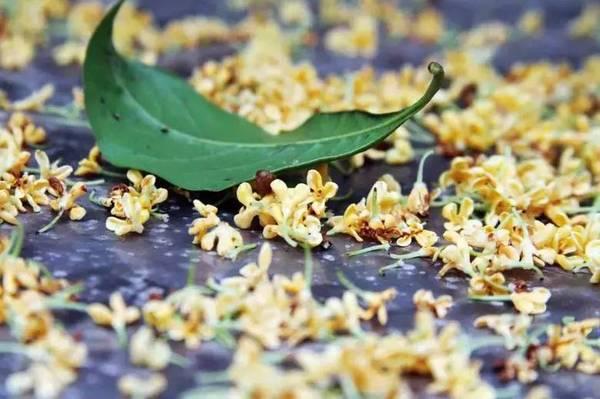 拾起掉在地上的几朵桂花,放在手心里,细细观察它,那桂花有六,七片花瓣